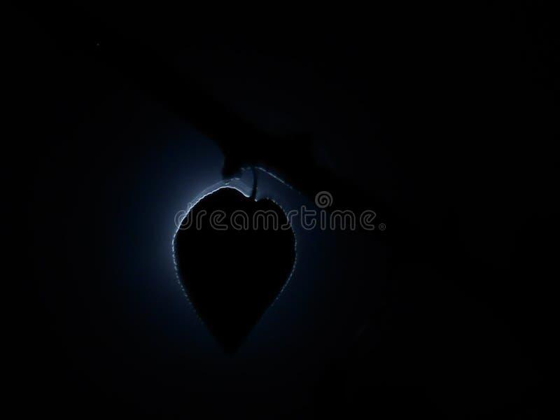 Тень лунного света стоковое изображение rf