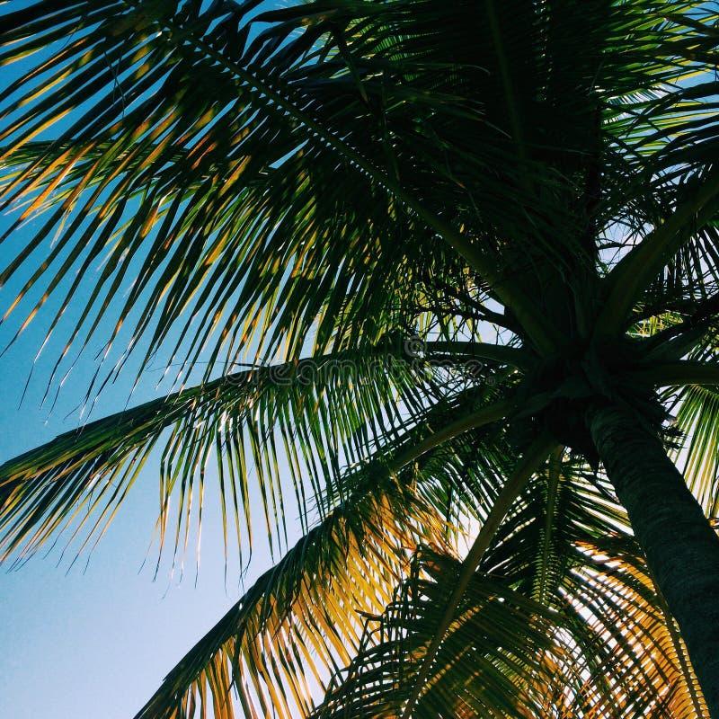 Тень пальмы стоковые изображения rf