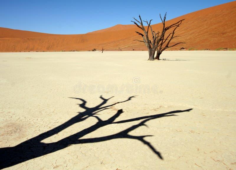 тень пустыни стоковая фотография