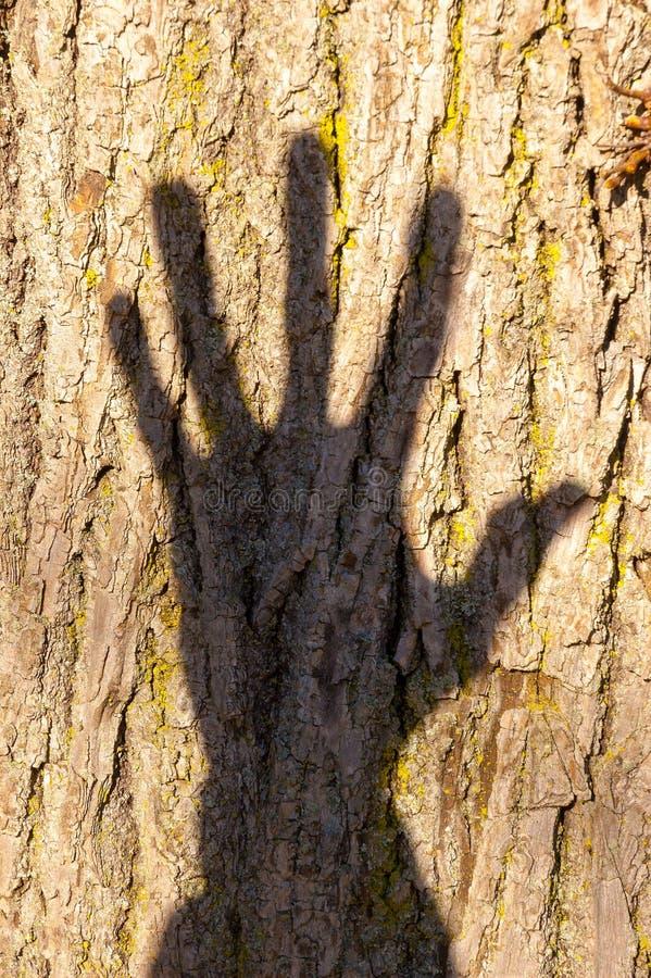 Тень руки на дереве стоковые фотографии rf