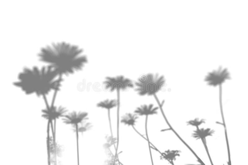 Тень травы поля на белой стене Черно-белое изображение для верхнего слоя или модель-макета фото стоковые изображения