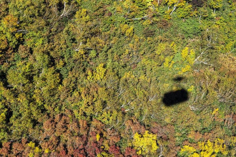 Тень фуникулера на предпосылке зеленого цвета леса стоковые изображения rf