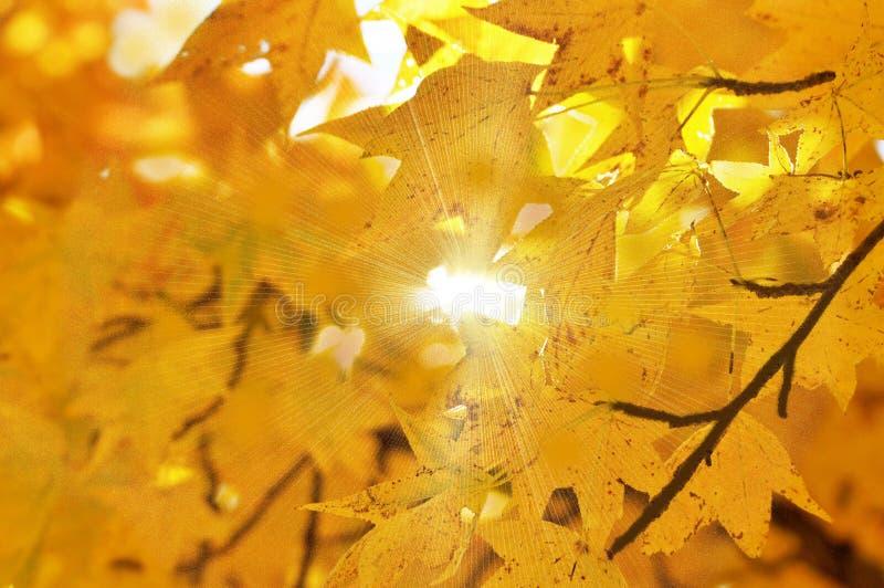 Теплое солнце осени светя через золотые листья стоковая фотография