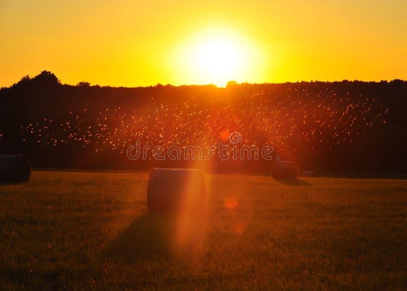 Теплый заход солнца лета стоковая фотография