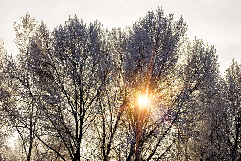 Тепловатый солнечный луч проходит через ветви покрытого дерева снегом стоковое фото rf