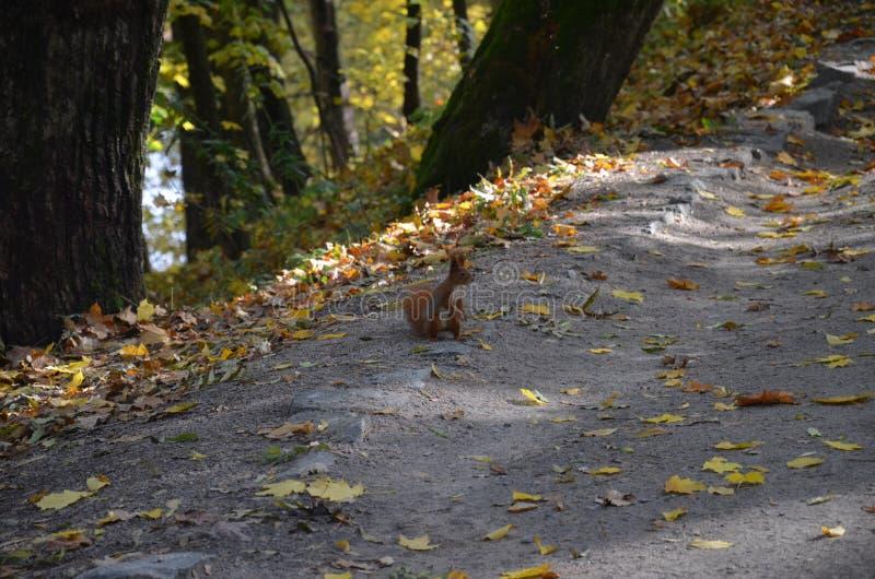 Теплый день осени в красивом природном парке стоковое изображение rf