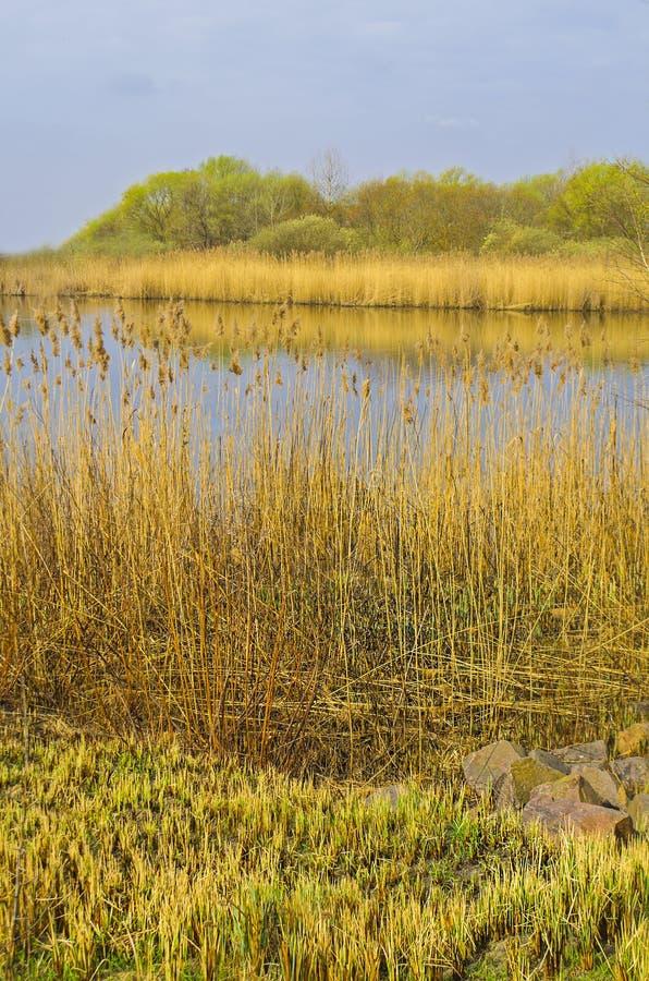 Теплый пейзаж осени стоковое фото rf