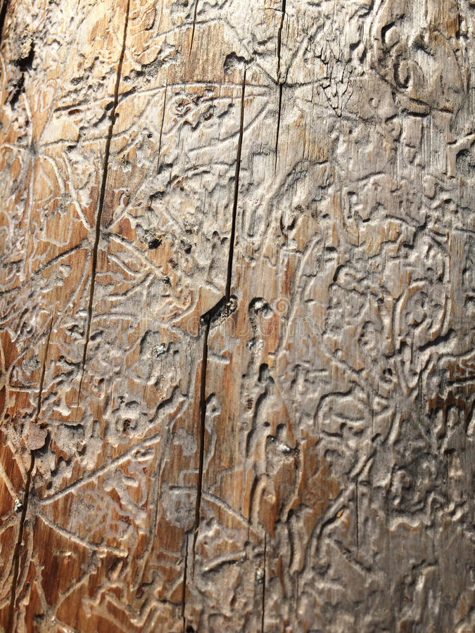 Термит в древесине стоковая фотография