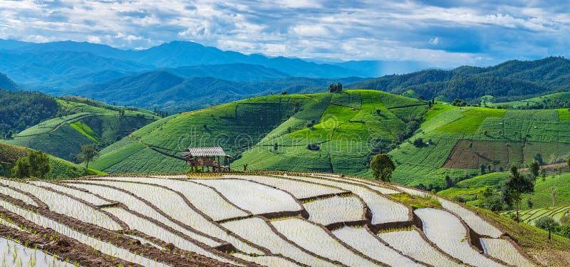Терраса риса в пасмурном освещении сезона дождей стоковые фото