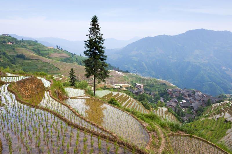 терраса риса ландшафта фарфора стоковые изображения rf