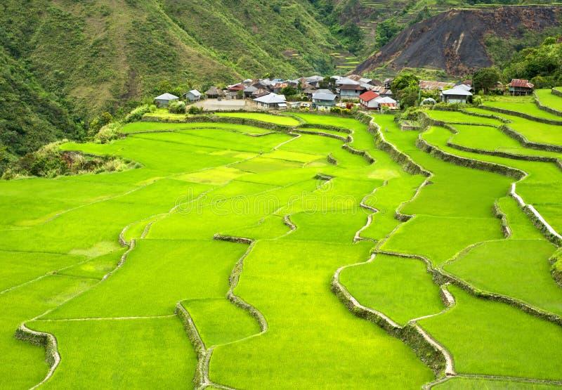 терраса риса стоковые изображения