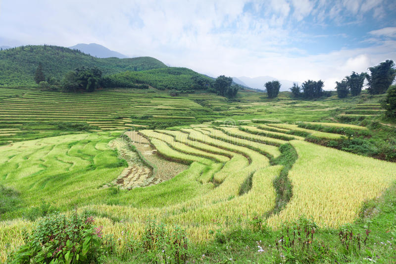 Терраса риса стоковые изображения rf