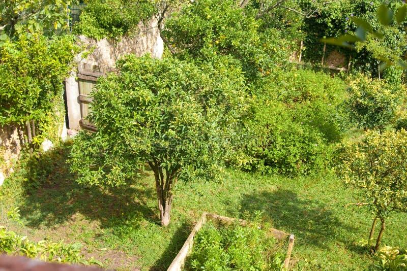 терраса сада входа стоковые изображения rf