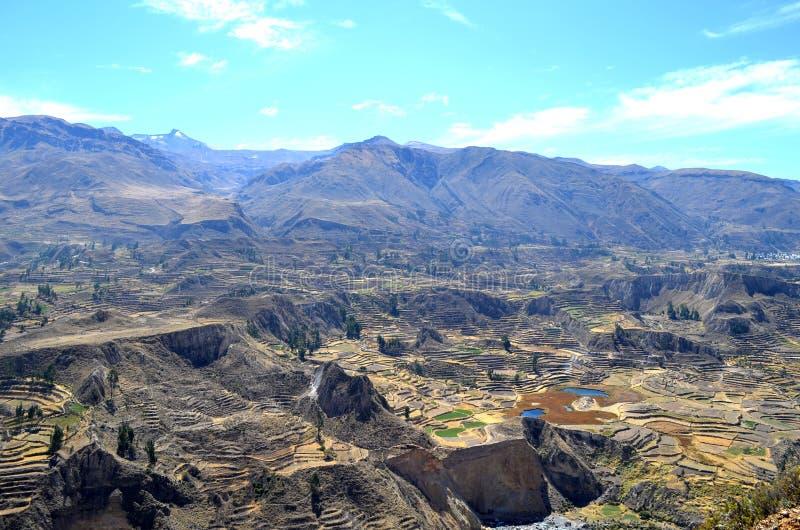 Терраса fields в долине Colca, Перу стоковое изображение rf