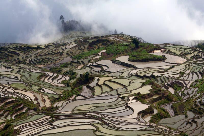 Террасное поле риса в сезоне воды в Yuanyang, Китае стоковые фото