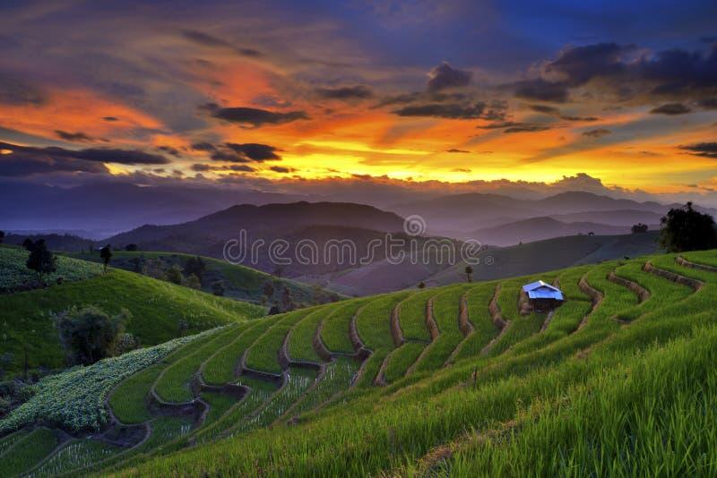 Террасное поле риса, Mae Chaem, Чиангмай, Таиланд стоковое изображение rf