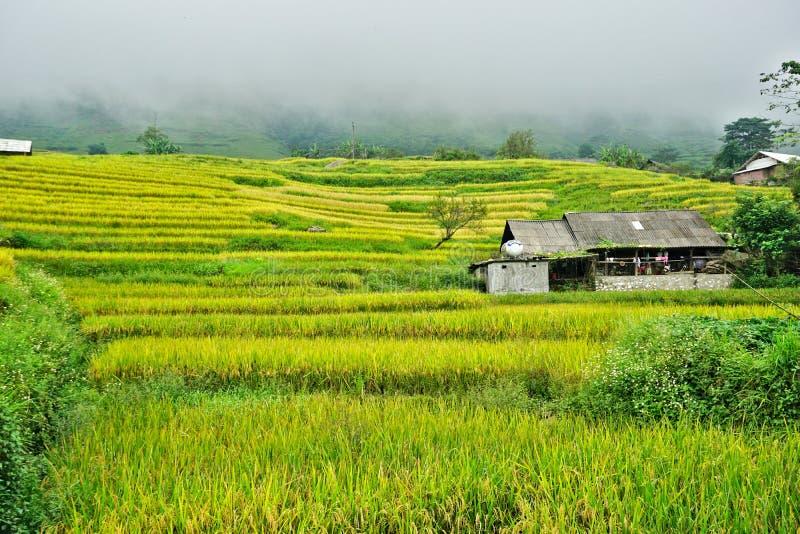 Террасные рисовые поля в холмистом районе Sapa, северо-западном Вьетнаме стоковые фото