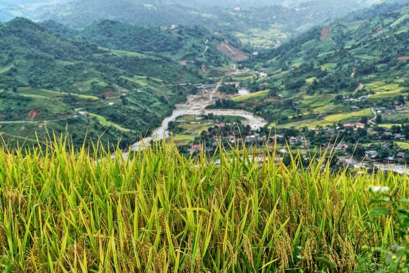 Террасные рисовые поля в холмистом районе Sapa, северо-западном Вьетнаме стоковая фотография rf