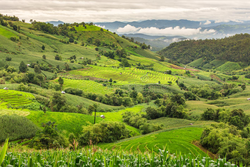 Террасные рисовые поля в деревне Mae-варенья стоковое фото rf
