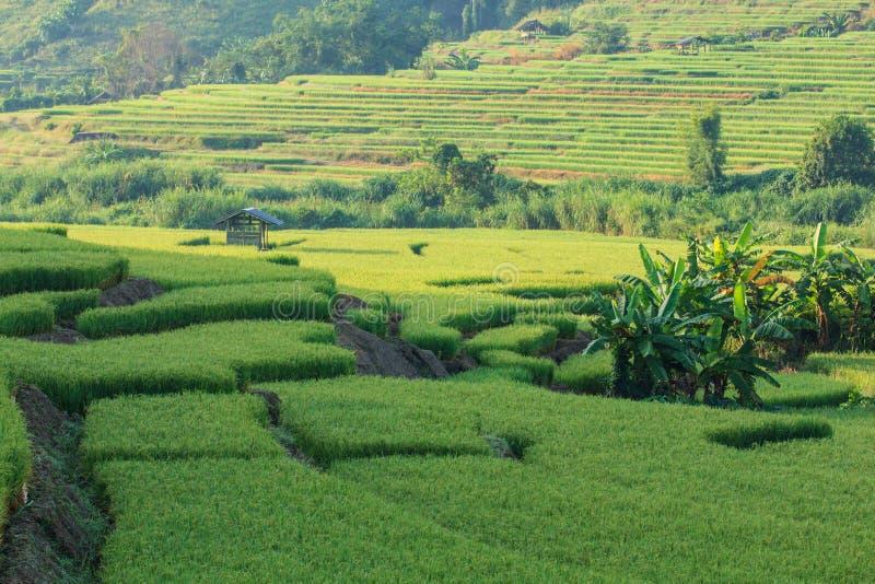 Террасные рисовые поля стоковое фото