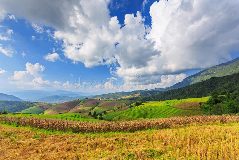 Террасные рисовые поля стоковая фотография rf