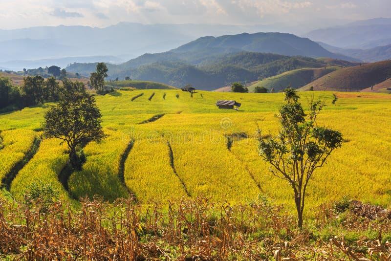 Террасные рисовые поля стоковая фотография