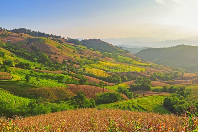 Террасные рисовые поля стоковое изображение