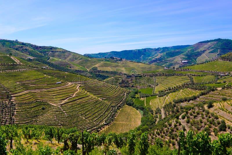 Террасы виноградников, ландшафт гор Дуэро, вино Oporto стоковая фотография rf