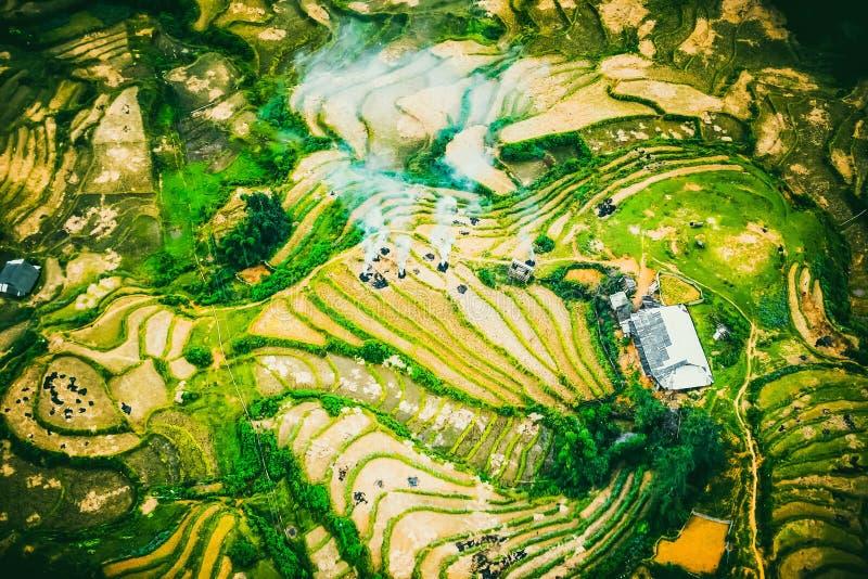 Террасы поля риса на Sapa Вьетнаме стоковое фото rf