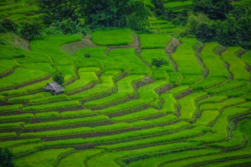 Террасы поля риса стоковое фото rf