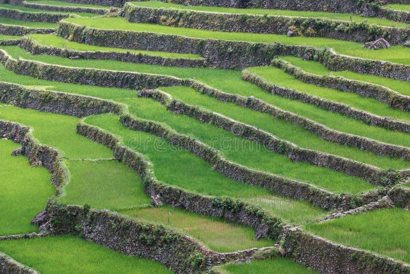 Террасы поля риса Batad в провинции Ifugao, Banaue, Филиппинах стоковая фотография rf