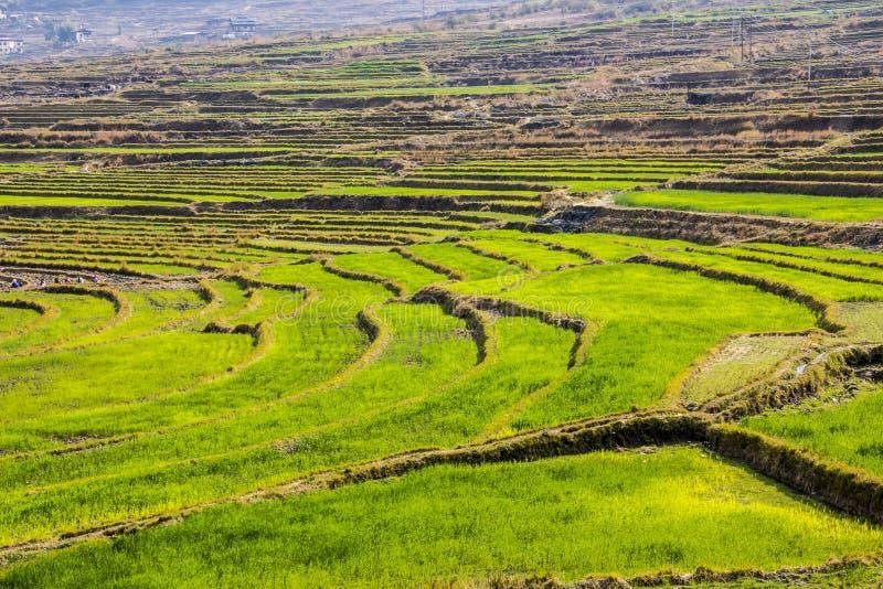Террасы риса, Бутан стоковое фото