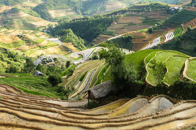 Террасы риса в Вьетнаме стоковые фотографии rf