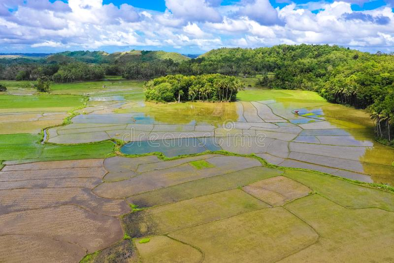 Террасы риса в Филиппинах Культивирование в севере Филиппин, Batad риса, Banaue стоковое фото rf