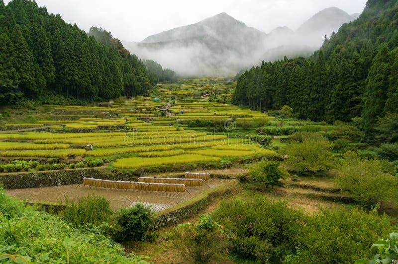 Террасы риса деревни Youtsuya, Японии стоковые изображения