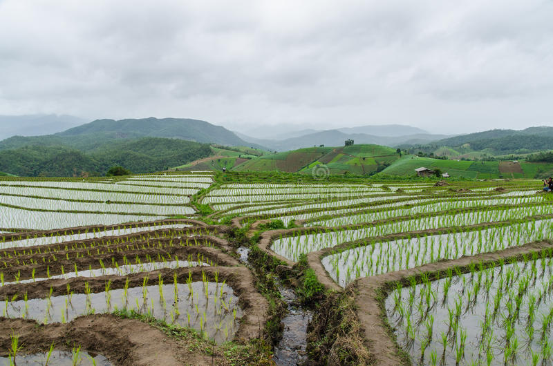 Террасы риса на chiangmai варенья mea стоковые фото