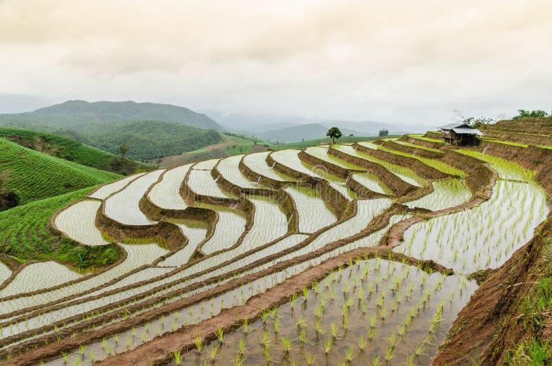 Террасы риса на chiangmai варенья mea стоковые изображения rf