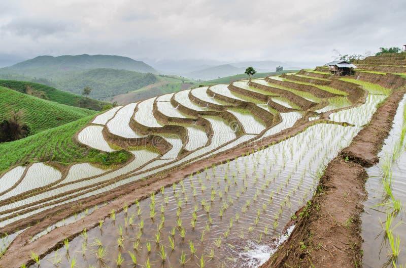 Террасы риса на chiangmai варенья mea стоковые изображения