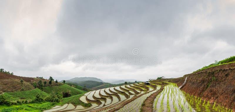 Террасы риса на chiangmai варенья mea стоковая фотография rf