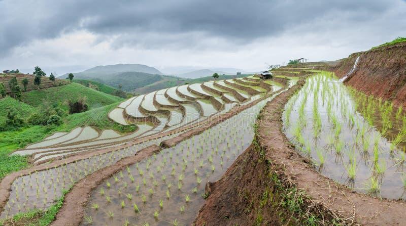 Террасы риса на chiangmai варенья mea стоковое фото