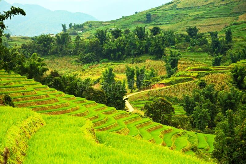 террасы риса поля стоковые фотографии rf