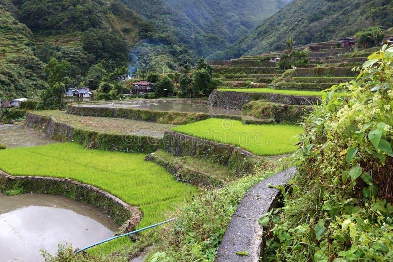 Террасы риса Филиппин стоковое фото rf