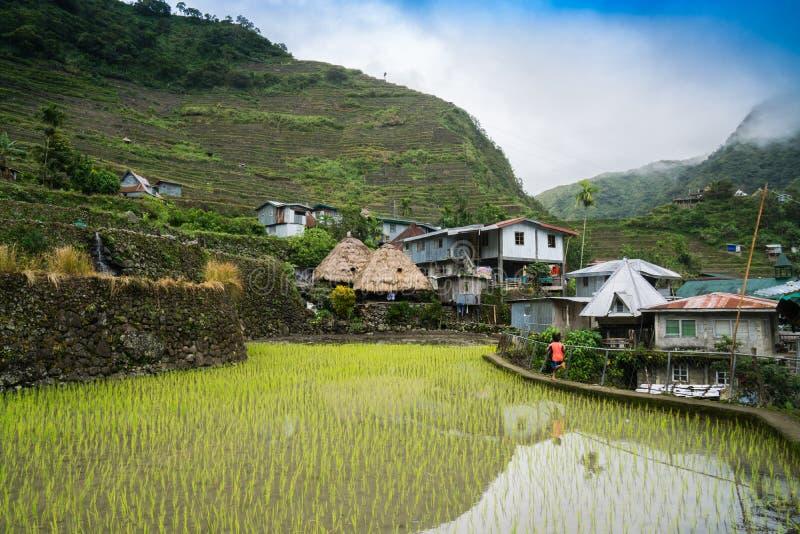 Террасы риса Banaue стоковые фотографии rf