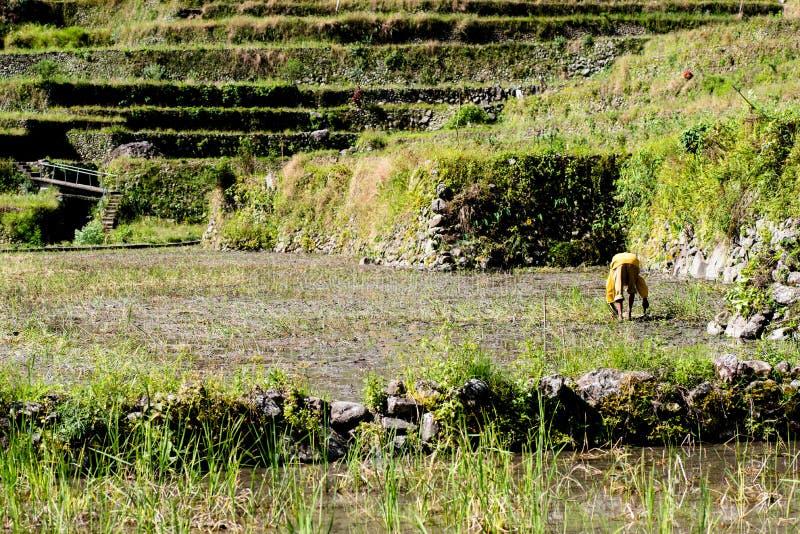 Террасы риса Batad, Banaue, Ifugao, Филиппины стоковое изображение