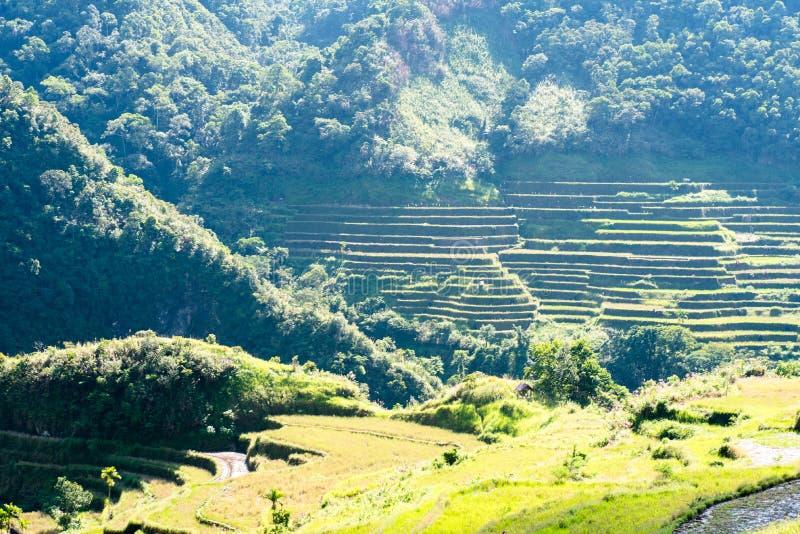 Террасы риса Batad, Banaue, Ifugao, Филиппины стоковые фото