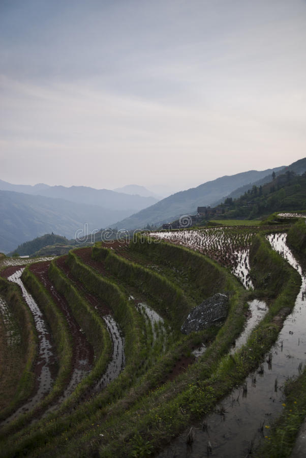 Террасы риса Longsheg (Китай) на заходе солнца стоковое изображение rf