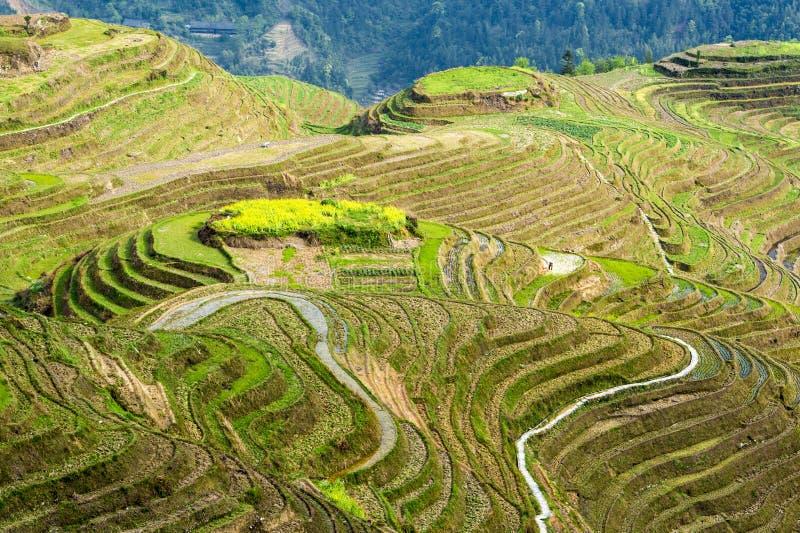 террасы риса longsheng фарфора стоковые фото