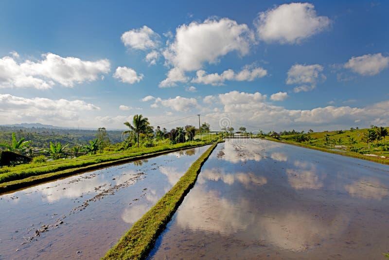 террасы риса luwih jati bali стоковая фотография rf