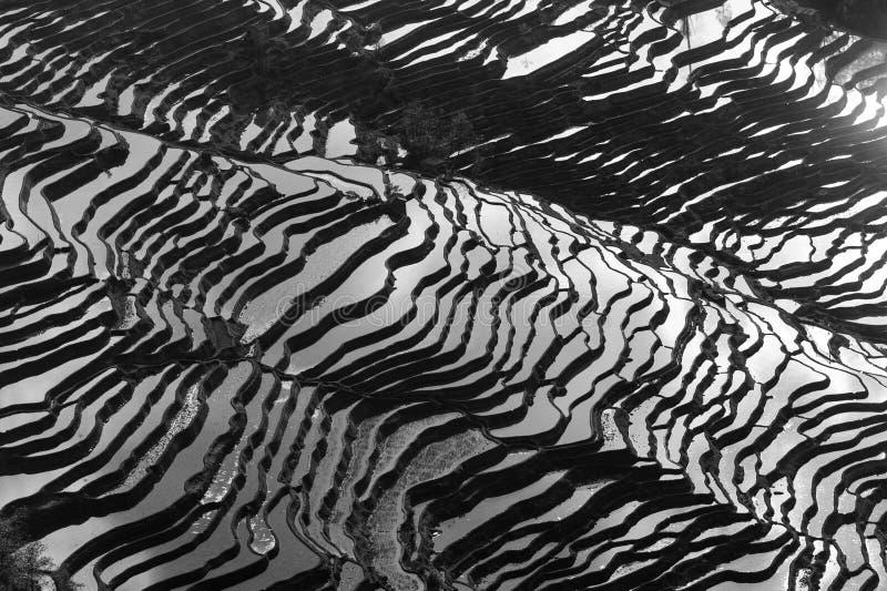 Террасы риса Yang юаней стоковые фотографии rf