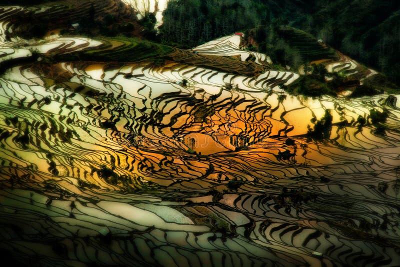 Террасы риса Yuanyang в Юньнань, Китае стоковые изображения